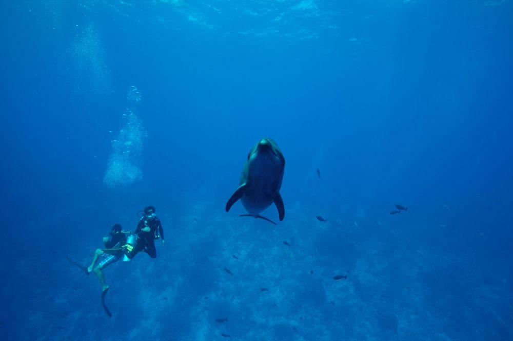 dauphins 2.jpg
